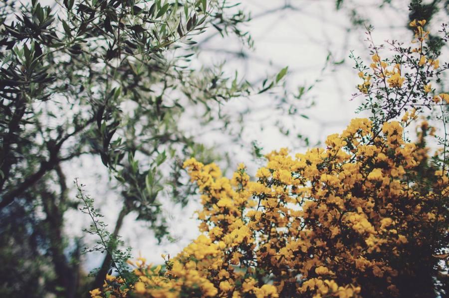 2 Spring (6)