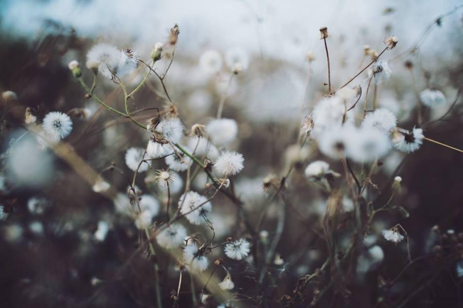 4 Autumn (1)