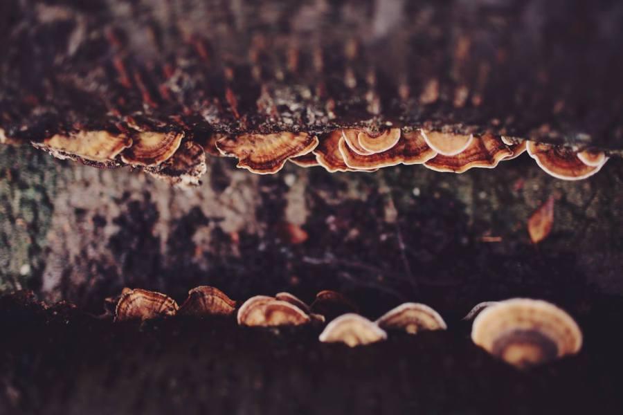 4 Autumn (11)