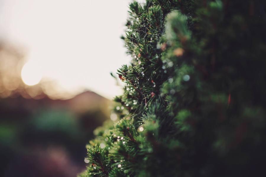 4 Autumn (12)