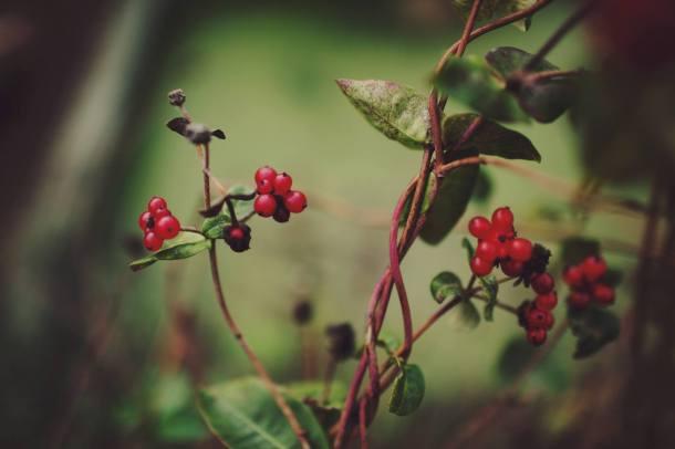 4 Autumn (4)