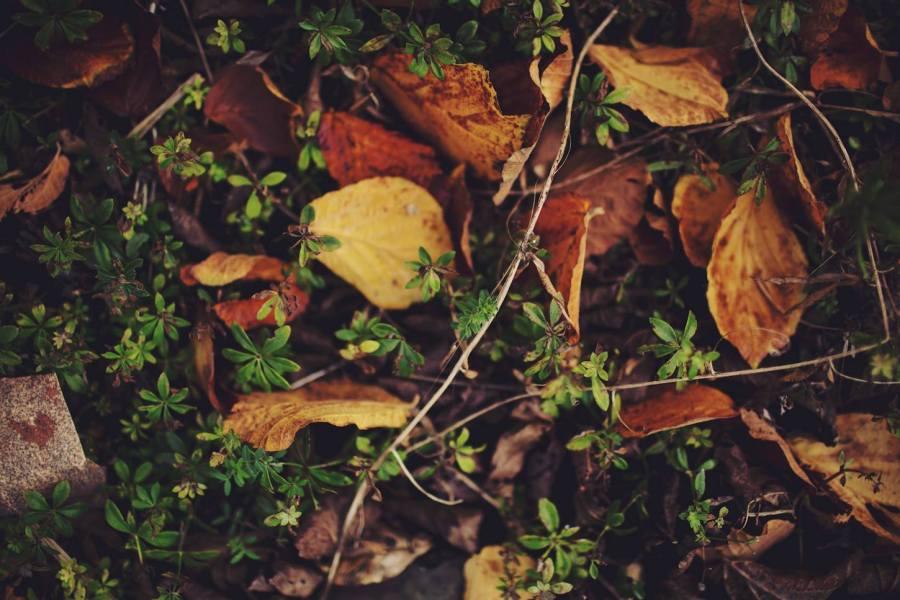 4 Autumn (6)
