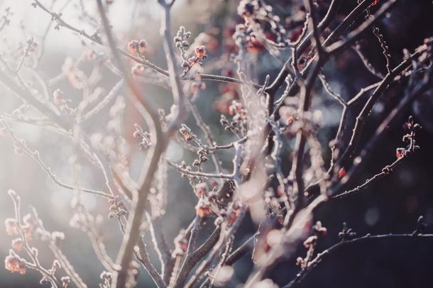 5 Winter (15)