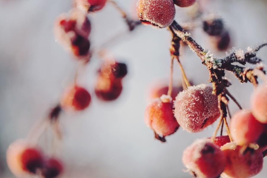 5 Winter (16)