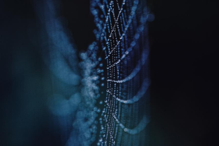 Spider webs by EL (10)