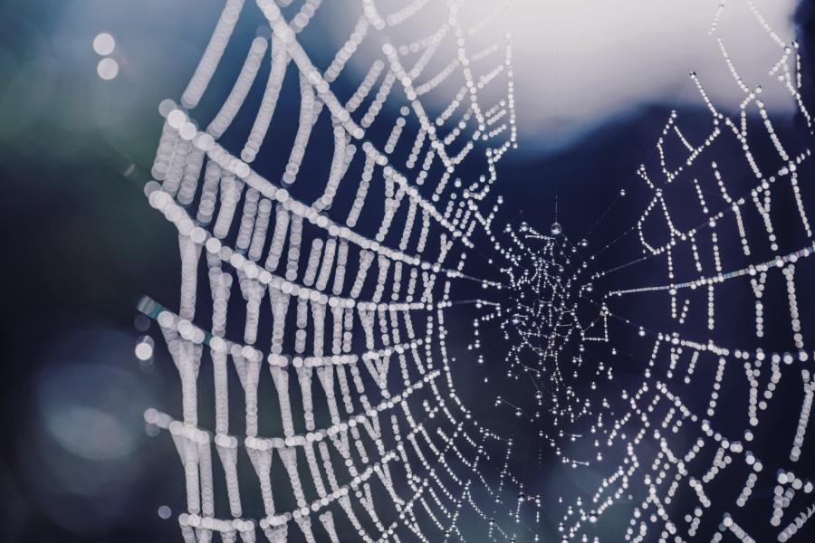 Spider webs by EL (11)