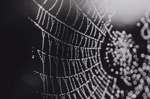 Spider webs by EL (12)