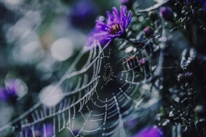 A sonnet of spiderwebs.