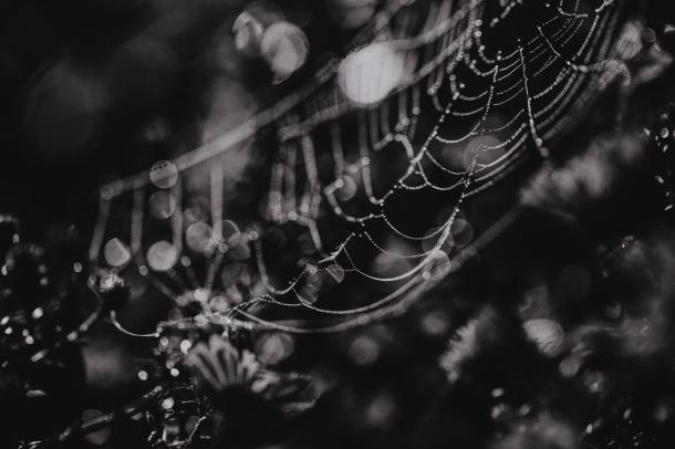 Spider webs by EL (6)
