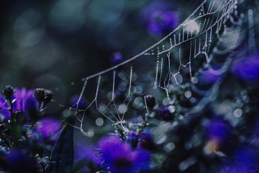 Spider webs by EL (9)