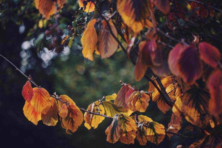 Autumn 2015 vII (5)